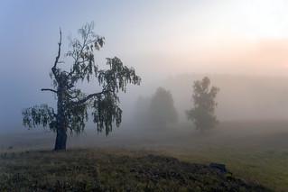 Утро #своифото, #пейзаж, #природа, #утро, #рассвет, #дерево, #натура, #восход, #sunrise, #nature, #tree, #Landscape, #sun, #туман, #лучи, #foggy, #природа, #небо, #небоголубое, #сониальфа, #сониа6000, #sonyalpha, #sonya6000, #natgeoru, #natgeorussia, #nat