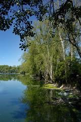 """Altrhein  """" Corsica """" (tucsontec) Tags: rhein altrhein natur nature travel trees tamron outdoor germany rheinsheim wasser river fluss september"""