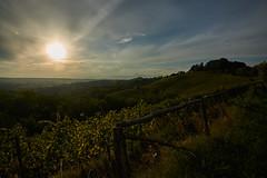 Savorgnano del Torre (paolo-p) Tags: vigneti wineyards linee lines nuvole clouds savorgnanodeltorre povoletto sole sun