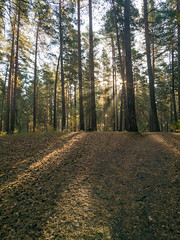 IMG_20180919_092424 (alexey.turkov) Tags: huaweip9 huawei forest autumn sun sunlight