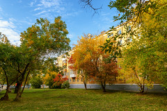 Autumn in our yard (Alexis2k) Tags: autumn autumncolors yard novosibirsk trees colors yellow yellowleaves
