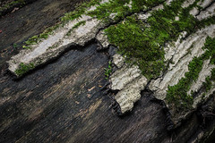 missing bark (r3d.rav3n) Tags: sarver pennsylvania unitedstates us