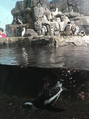 IMG_1266 (paschulea) Tags: monterey aquarium