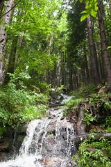 IMG_4825 (Alexander Malyshev) Tags: canon carpathians ukraine forest nature woods mounts
