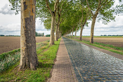 Plane trees along a road with cobblestones (RuudMorijn-NL) Tags: agriculture background branch clouds cloudy cobble cobblestones colorful country empty farm field foliage grass green landscape lane leaf light lush nature netherlands old outdoor outdoors paved perspective plane plant platanus reflection road row rural scene scenic season sky spring stone street summer sunlight tall texture tree trees trunk way langeweg gemeentemoerdijk noordbrabant kinderkopjes keien kasseien platanen plataan schors hoge bomen perspectief landschap wolken wolkenlucht bewolkt zomer scheef glanzend reflectie akker geploegd leeg boerderij lijnen