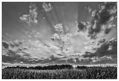 Sunset Near Cleveland Ohio (GAPHIKER) Tags: cleveland ohio punderson state park crepuscularrays crepuscular rays sun corn field