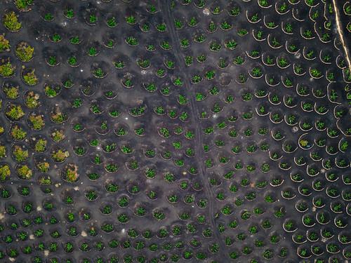 Arieal view of winery grape fields / Luftbild von Weingut Traubenfeldern