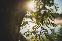 Midsummer18-41 (junestarrr) Tags: summer finland lapland lappi visitlapland visitfinland finnishsummer midsummer yötönyö nightlessnight kemijoki river