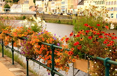 Floral Delight (acwills2014) Tags: fence fencefriday floral flowers display france fleurs colours colourful pastels river riverbank chateaulin brittany echinaceas