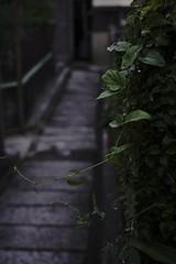 20180912a7_2607 (Gansan00) Tags: ilce7m3 α7ⅲ sony zeiss japan 日本 landscape 9月 yamaguchi syuunan sukumojima snaps rain 雨 山口県 周南市 粭島