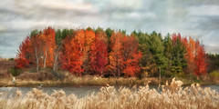 Autumn Landscape (David DeCamp) Tags: autumn beauty field tree topazimpression2 texture tranquil cloud sky color cold
