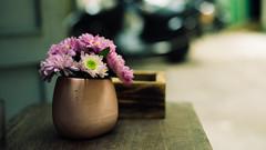 DSC01577-2 (Mudita Meraki) Tags: sonya7ii carlzeissplanar50mmf17 flower plant