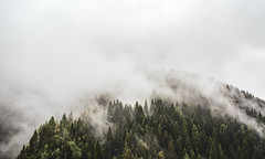 Nebelige Berge (simonpe86) Tags: nebel light landscape landschaft schweiz tannen mist switzerland berge alps forest wald alpen mountain