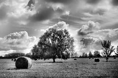 OLYMPUS OM10 Zuiko 2.8 35 Foma 100 LC29 (Leinik) Tags: olympus om10 zuiko 28 35 foma 100 lc29 paysage landscape arbre tree black white blanc noir blanco negro bianco nero