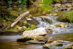 (michael-moll) Tags: gewässer flüsse natur langzeitbelichtung nikond7500 rothenburgobdertauber taubertal schandtauber