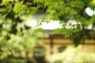 Summer zen windows- Nanzen-ji Kyoto 京都 南禅寺