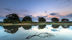 Mogshade Reflections (nicklucas2) Tags: newforest heather bracken tree branch reflection water grass cloud pond