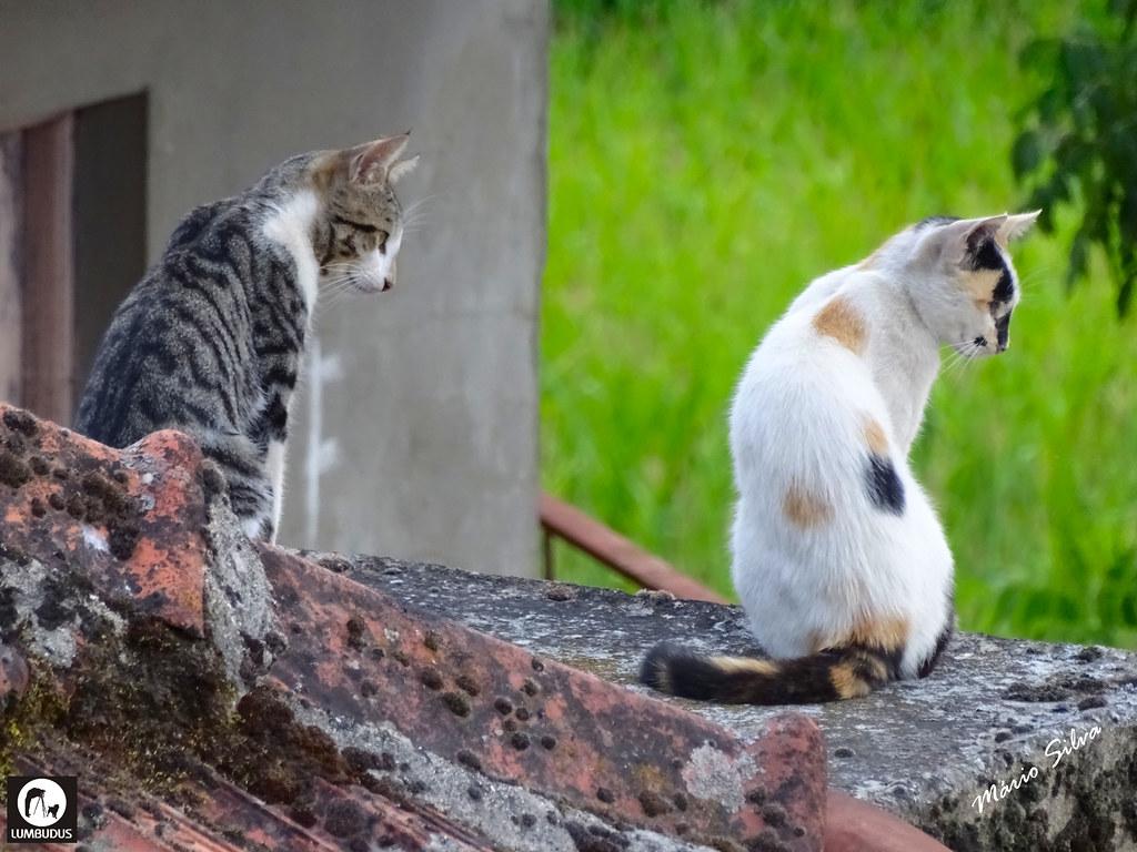 Águas Frias (Chaves) - ... os gatos atentos ... a sabe-se lá o quê ...