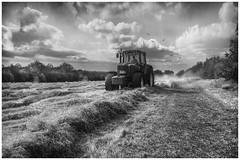 Hay Making, Bushey Fields (David Pomfret) Tags: haymaking busheyfields bushey hertfordshire tractor hay fields england uk