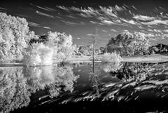 Infra Red - Nikon D200 (PetrusJohannes) Tags: woodbridge texas wylie lake water trees reflection infra red ir nikon d200