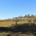 Reeds and Reed Grasses, Okavango Delta, Botswana