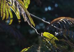 September glow (humbletree) Tags: madisonwisconsin september olhbrichgardens