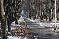 Winter's grasp in the park (Peter Szasz) Tags: winter trees woods park shadows light landscape nature lamps path walk straight cold chill snow leaves branches paved hungary walkway berettyóújfalu hajdúbihar magyarország
