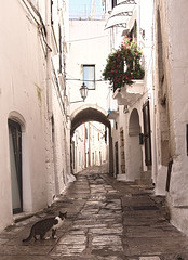 Ostuni, With Or Without Cat (Coquine!) Tags: christianleyk ostuni puglia apulia apulien italy italia italien white weiss bianco alley gasse narrow mediterranean mittelmeer cat gato katze