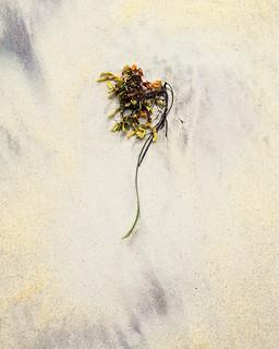 Seaweed Simplicity º