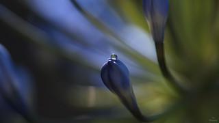 WaterDrop in Light...