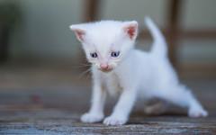 kittens II (05) (Vlado Ferenčić) Tags: kitty kittens animals vladoferencic vladimirferencic catsdogs cats hrvatska croatia hrvatskozagorje klenovnik nikond600 tamron9028macro