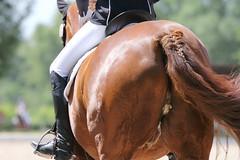 _MG_9662 (dreiwn) Tags: dressurprüfung dressurreiten dressurpferd ridingarena reitturnier reiten reitplatz reitverein reitsport ridingclub equestrian horse horseback horseriding horseshow pferdesport pferd pony pferde tamronsp70200f28divcusd dressur dressuur dressyr dressage