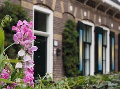 Cute home (M_Strasser) Tags: holland netherlands olympusomdem1 olympus
