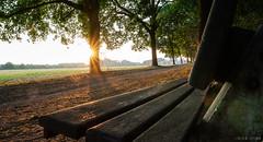 parkbenchflavour (chris4all) Tags: chris4all nature natur sunrise sonnenaufgang bench parkbench parkbank bank weg wald allee sonne morgen morning sun tree light