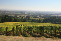 IMG_6610 (willsonworld) Tags: willamette valley wine tasting grapes 2014