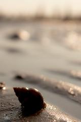 Venice, Italy Selection (Ukelens) Tags: ukelens italy italien italia venedig venice venezia summer sommer beach strand sonne sonnenschein sonnenstrahl sonnenuntergang sonnenstrahlen sonnenaufgang sonnenlicht sun sunbeam sunset sunstream sunlight sunrise sunbeams lightroom light lights lighteffects licht lichter lighteffect lichteffekt lichteffekte lightshow li stadt town mediterran mediterranean holidays ferien meeresfrüchte seafood muschel shell meer sea shadow schatten