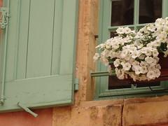 (degreve.sarah) Tags: flowers window