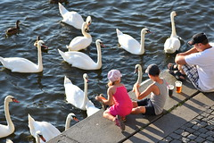Kids playing with swans and ducks (Pavel's Snapshots) Tags: kids children childhood play fun happy afternoon promenade vltava river prague praha czech republic swans ducks birds summer d750 nikon 180mm