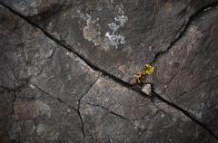 Perseverance (calumarchibald) Tags: rock cracks scottish scotland nifty fifty 50mm canon canon6d minimalism
