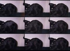 9 Lives (Jetcraftsofa) Tags: lomopop9 vista200 35mm pointandshootcamera filmphotography flashphotography cat neko 9lives repeatingimage blackcat mulitilens