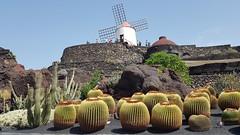 Jardin de Cactus - Lanzarote - 2018-09-13 (BillyGoat75) Tags: cactus cacti windmill garden jardindecactus gualiza lanzarote thecanaryislands spain