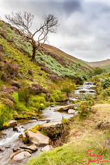 Fair Brook (SileeSoft) Tags: stream waterfall landscape heather brook fairbrook peakdistrict