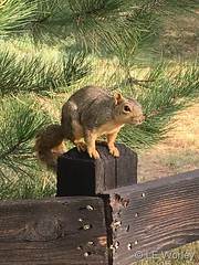 August 23, 2018 - Guardian of a Thornton trail. (LE Worley)
