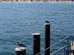 P8090266 (diddi.tr) Tags: binz rügen ostsee strandpromenade