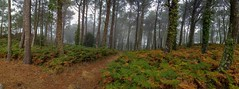 Bosques frondosos (DAVID MARCHENA) Tags: green fog forest tree island dramaticlandscape landscape colors panorámica spain galicia nature naturaleza trees explore hojasotoñales bruma árboles wood