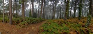 Bosques frondosos
