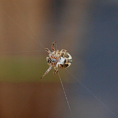 2018_07_0281 (petermit2) Tags: spider northcavewetlands northcave brough eastyorkshire eastridingofyorkshire yorkshire yorkshirewildlifetrust ywt wildlifetrust wildlifetrusts