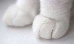 White paws (Pat's_photos) Tags: pet cat paw white smileonsaturday whiteonwhite happy scatsurday happyscatsurday