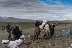 D4I_1586 (riccasergio) Tags: china cina tibet alidiqu xizangzizhiqu cn kailash kora