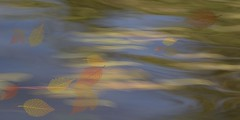 Fall Fantasy (Note-ables by Lynn) Tags: icm cameramovement painterly water